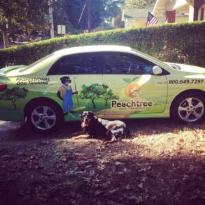 Peachtree Dog Training Atlanta can help your dog!