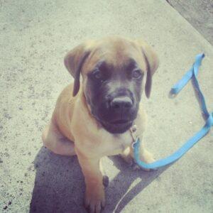 puppy training in atlanta
