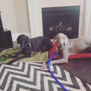 Dog Trainer Atlanta Blog - Be the Pack Leader!