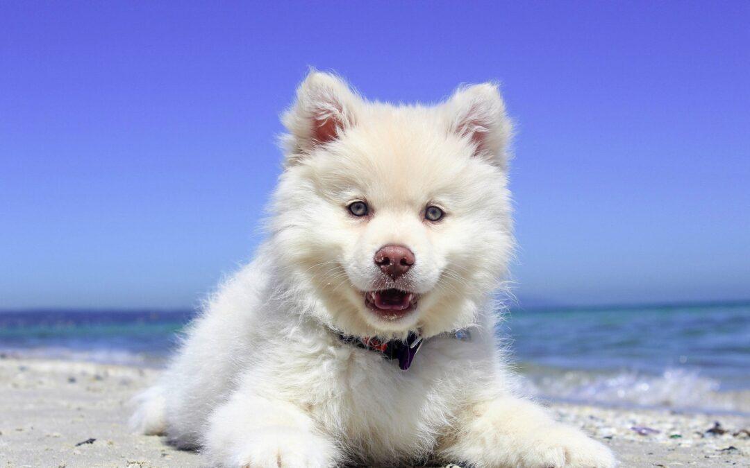 Case Study: Training a Deaf Dog